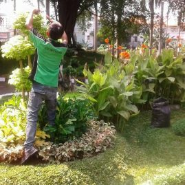 Perawatan Taman