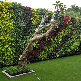 Jasa Vertikal Garden